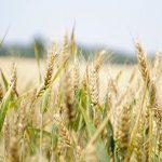 Agricoltura Sostenibile - News italiane per ogni costa del mondo - La Costa Group